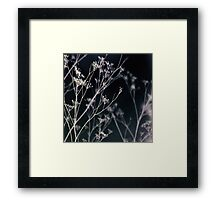 Growing in Silence Framed Print