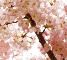 Pink Cherry Blossoms - Impressions Of Spring Sticker