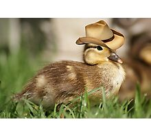 Duck wearing cowboy hat 1 Photographic Print