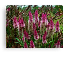 Plant 4356 Canvas Print