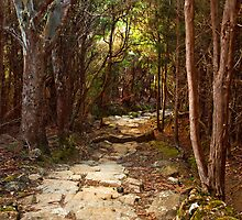 Springs Track on Mount Wellington #2 by Chris Cobern