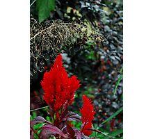 Plant 4350 Photographic Print