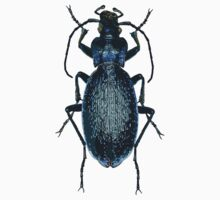 Blue Ground Beetle Baby Tee