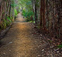 Pinnacle Track, Mount wellington by Chris Cobern