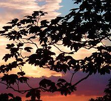 Zen - Birchover, Derbyshire. by Hairypoet