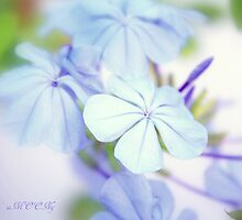 Blue softness by aMOONy