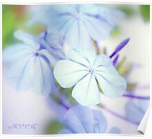 Blue softness Poster