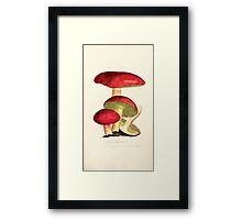 Coloured figures of English fungi or mushrooms James Sowerby 1809 0559 Framed Print