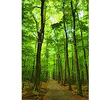 Green Light Harmony - Walking Through The Summer Forest Photographic Print