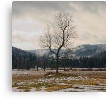 Winter Plains Canvas Print