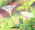 In the garden 8 by aMOONy