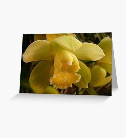 Season 2010 Orchid - 1 Greeting Card