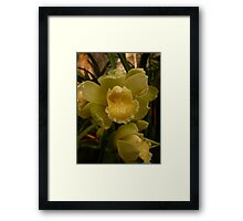 Season 2010 - Orchid 2 Framed Print