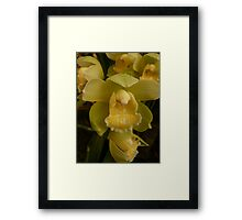 Season 2010 Orchid 3 Framed Print