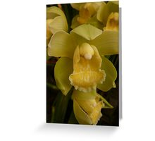 Season 2010 Orchid 3 Greeting Card