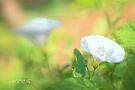 The simple beauty by aMOONy