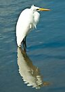 Great Egret by Tim Topping