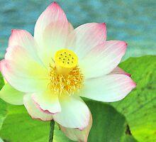 Open Face Lotus by Valerie Rosen
