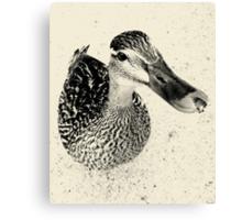 Quack! - Newstead Abbey, Nottingham Canvas Print