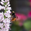 Let it Bee by Steve plowman