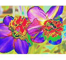 Colorful daffodils Photographic Print