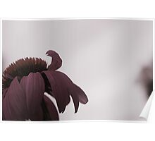 Garden in bloom - macro flower head Poster