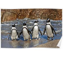 funny image of  four walking African Penguin Poster