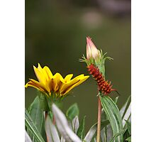 Caterpillar Journey Photographic Print