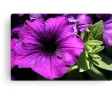 Purple Power Canvas Print