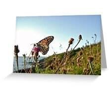 Beautiful Butterfly at Beavertail © 2010.07.26 Greeting Card