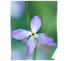 Lilac Yearning Poster