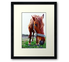 Funny horse in  field Framed Print
