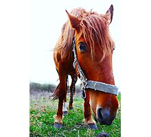 Funny horse in  field Photographic Print