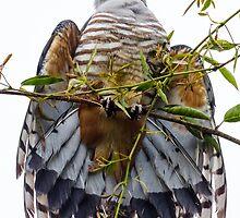 Birds of Brisbane by Teale Britstra