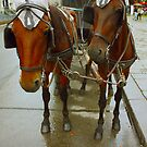 Vienna horses by a1luha