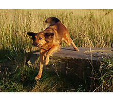Ellie the dog Action Shot  Photographic Print