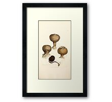 Coloured figures of English fungi or mushrooms James Sowerby 1809 0845 Framed Print