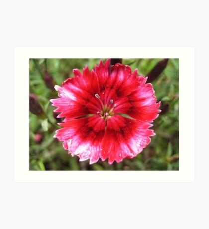 Pink Flower Macro (2) Art Print