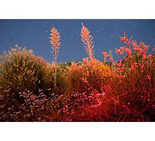 Midnight at Echo Mountain Observatory  Photographic Print