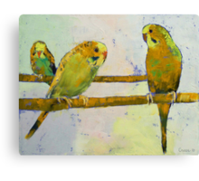 Three Parakeets Canvas Print