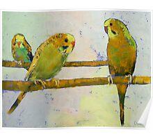 Three Parakeets Poster