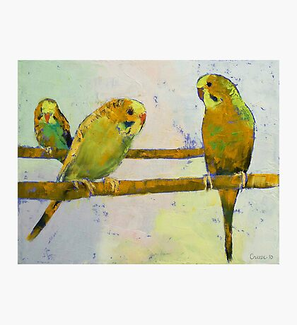 Three Parakeets Photographic Print