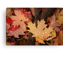 Fallen Maple Leaves Canvas Print