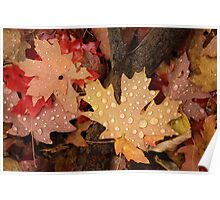 Fallen Maple Leaves Poster