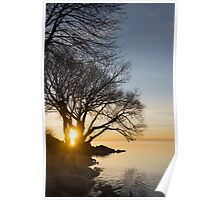 On Fire - Sunrise Through The Willows Poster
