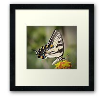 THE WOW FACTOR!!! Framed Print