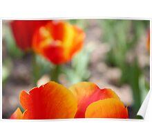 Red Petals a Blur Poster
