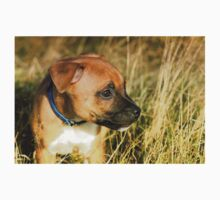 Staffordshire Bull-Terrier Puppy  Kids Clothes