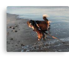 Beach Brawl Canvas Print