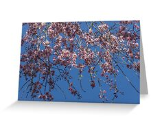 Pretty in Pink - a Flowering Cherry Tree and Blue Spring Sky Greeting Card